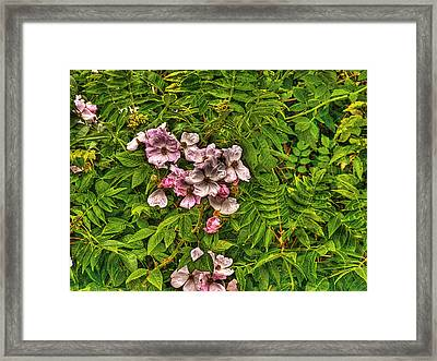 The Wild Rose Framed Print by William Fields