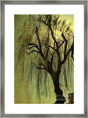 The Willow Tree Framed Print by Susanne Van Hulst