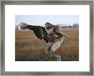 The Wind Beneath My Wings Framed Print by Paulette Thomas