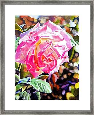 The Windsor Rose Framed Print by David Lloyd Glover