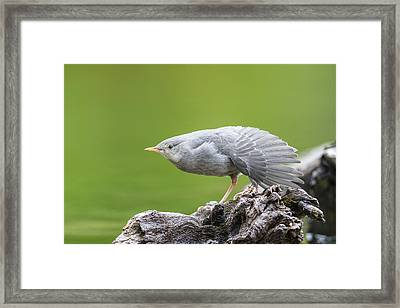 The Wing Stretch Framed Print by Tim Grams