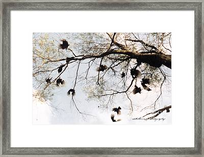 Framed Print featuring the photograph The Winged Tree by Vicki Ferrari