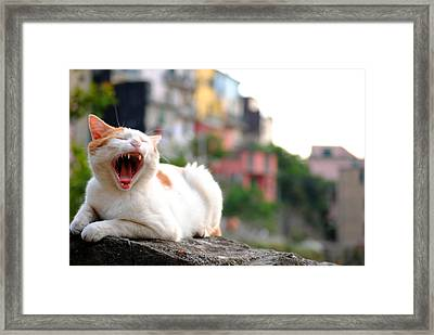 The Yawning White Cat Framed Print by Neha Singh