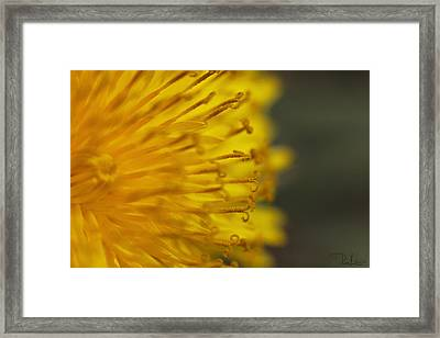 The Yellow Invasion Framed Print