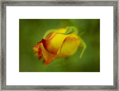 The Yellow Rose Framed Print by Diane Dugas