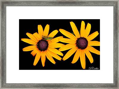 Framed Print featuring the photograph The Yellow Rudbeckia by Davandra Cribbie