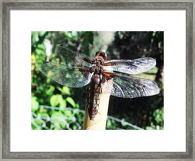 There Be Dragons Framed Print by Eric Kempson