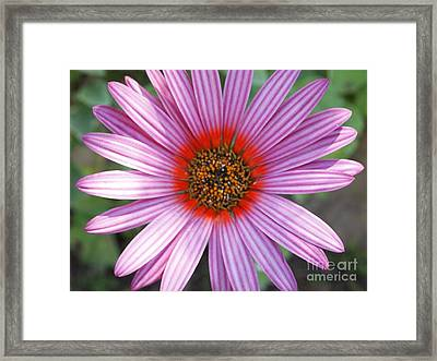 There Is Nothing Else To Say Framed Print by Kezza