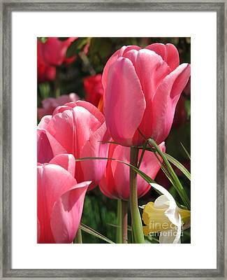 There Is Pink In Heaven Framed Print by Rory Sagner