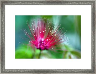 There Weren't Enough Words For The Colors. Framed Print by Laura George