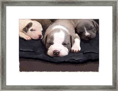 They Call It Puppy Love Framed Print by Angel Pachkowski