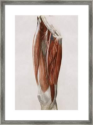 Thigh Nerves Framed Print