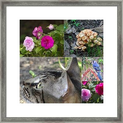 Things In My Backyard Framed Print by Betty Berard