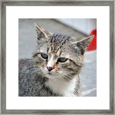 Thinking Cat Framed Print
