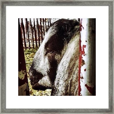 ...thinking Framed Print