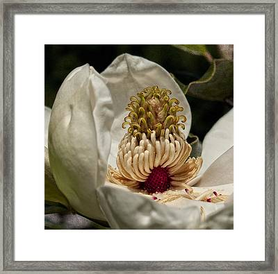 Third Stage Framed Print by Barbara Middleton