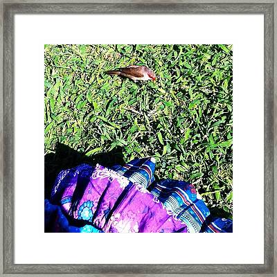 This #adorable #finch Really Liked My Framed Print