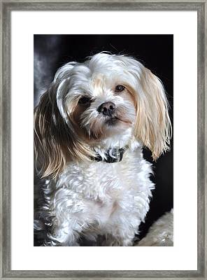 This Guy's My Best Friend Framed Print by Lisa  DiFruscio