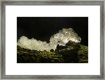 Framed Print featuring the photograph This Is A Very Hungry Cold Caterpillar  by Steve Taylor