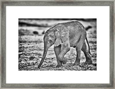 This Is Botswana No.  6 - Wait Up Mother Framed Print by Paul W Sharpe Aka Wizard of Wonders
