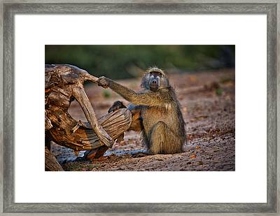 This Is Botswana No.  6 - Watching The Sun Go Down Framed Print by Paul W Sharpe Aka Wizard of Wonders