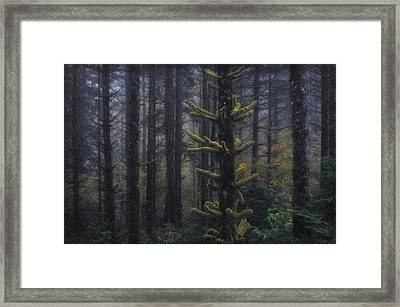 This Is British Columbia No.54 - Misty Mystical Moss Forest II Framed Print by Paul W Sharpe Aka Wizard of Wonders