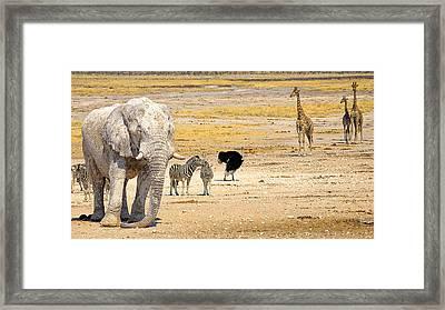 This Is Namibia No. 10 - Etosha White African Elephant  Framed Print by Paul W Sharpe Aka Wizard of Wonders