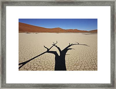 This Is Not A Tree Framed Print