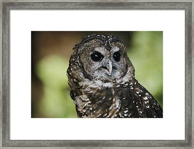 This Is Siskiyou, A Northern Spotted Framed Print by Joel Sartore