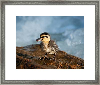 This Little Duck Framed Print by Heather Thorning