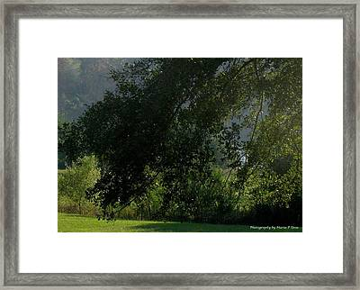 This Ole Tree Framed Print by Maria Urso