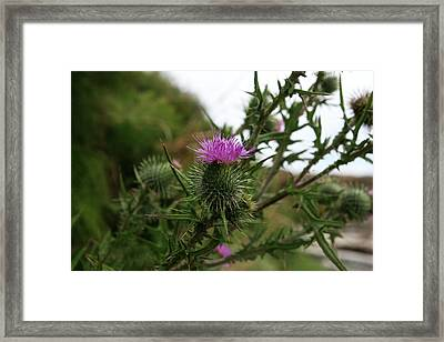 Framed Print featuring the photograph Thistle Bloom by Lorraine Devon Wilke