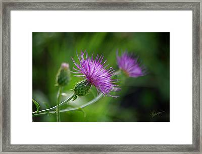 Framed Print featuring the photograph Thistle Dance by Vicki Pelham