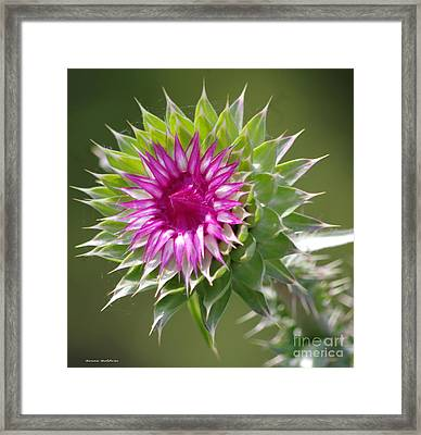 Thistle  Framed Print by Tannis  Baldwin