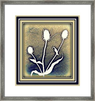Thistles Grouping Framed Print by Danielle  Parent