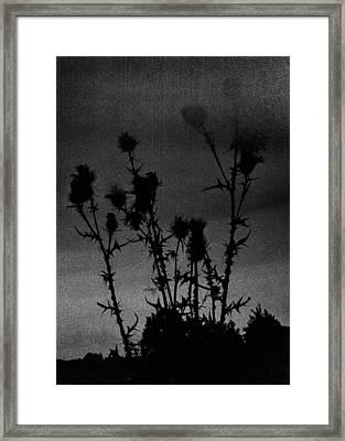 Thistles Framed Print by Hakon Soreide