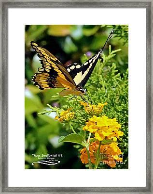 Thoas Swallowtail #2 Framed Print by Rebecca Morgan