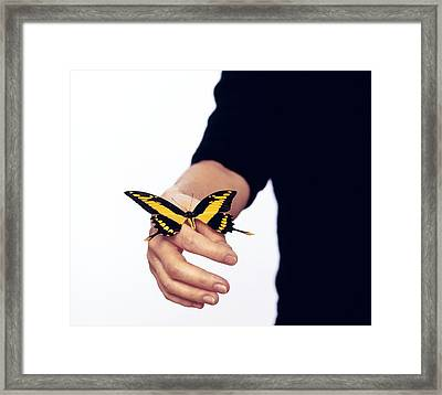 Thoas Swallowtail Butterfly Framed Print by Lawrence Lawry
