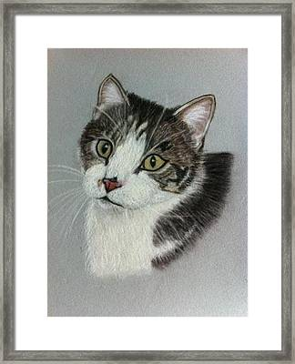 Thomas A Pastel Portrait Framed Print by Hillary Rose