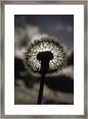 Thoreau Called A Dandelion A Complete Framed Print by Farrell Grehan