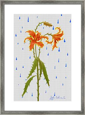 Thornlily Framed Print by John Selmer Sr