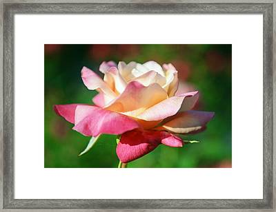 Thorns Have Roses Framed Print