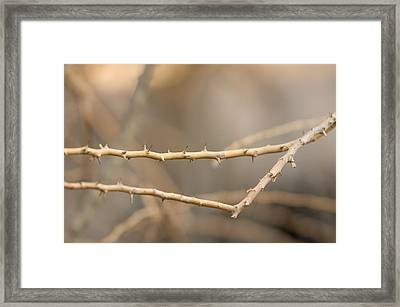 Thorny Desert Plant Inside The Desert Framed Print