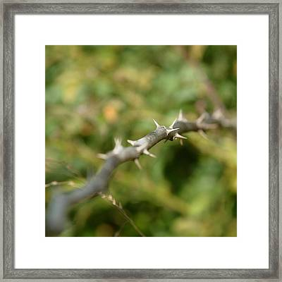 Thorny Framed Print by Lisa Phillips