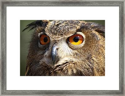 Those Eyes Framed Print by Paulette Thomas