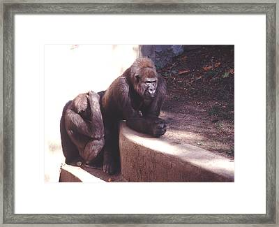 Framed Print featuring the photograph Thoughtful Gorilla With Child by Tom Wurl