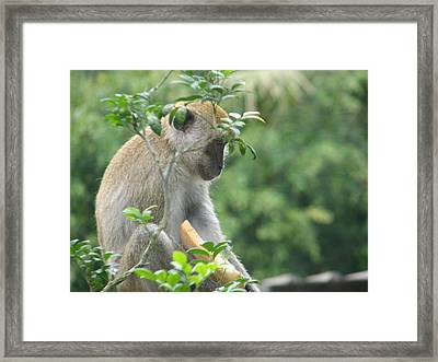 Framed Print featuring the photograph Thoughts by Shawn Hughes