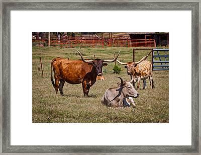 Three Amigos Framed Print by Doug Long