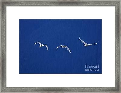 Three Amigos Framed Print by Sharon Talson