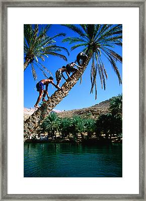 Three Boys Climbing Date Tree, Wadi Bani Khalid Framed Print